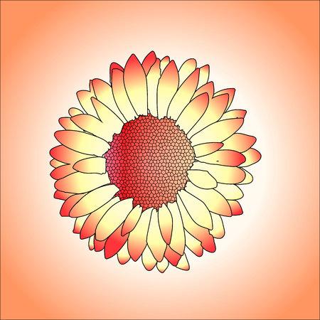 Vector illustration of beautifull flower on orange background.