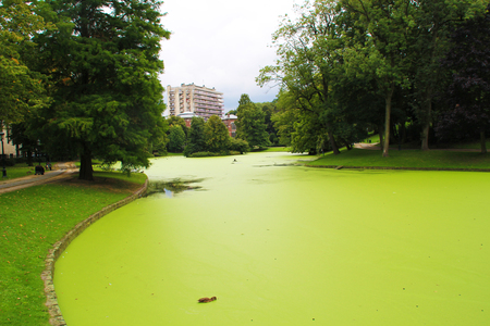 Photo of green lake with algae. Banque d'images