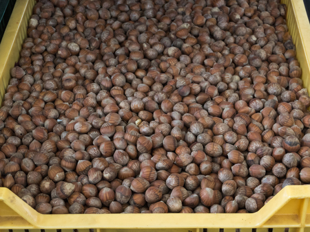 cobnut: Loose hazelnuts for sale at local farmers market
