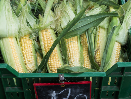 an agricultural district: Fresh corn on a farmers market Stock Photo