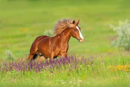 美しい花で夏の日に実行長いたてがみ赤馬