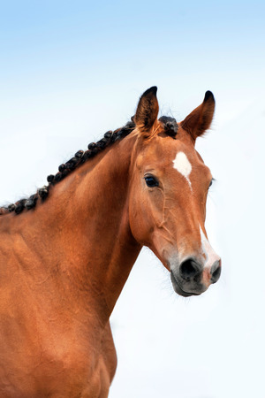 Beautiful bay horse portrait against blue sky 免版税图像