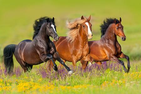 Horses run gallop in flower meadow