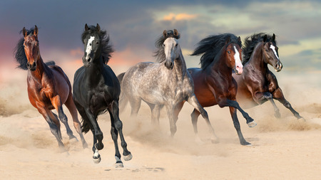 Horse herd run gallop on desert dust against sunset sky