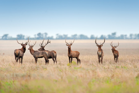 Deer herd in autumn pasture