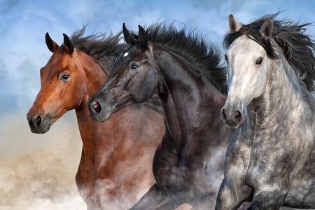 Horses run fast in the desert dust