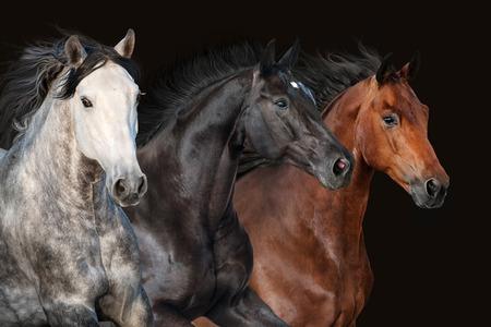 De kuddeportret van het paard in motie op donkere achtergrond Stockfoto
