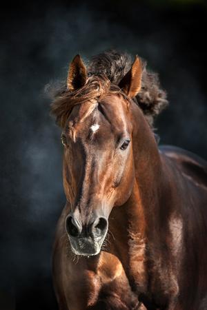 Cavallo rosso con ritratto lungo mane in movimento su sfondo drammatico scuro Archivio Fotografico - 85041427