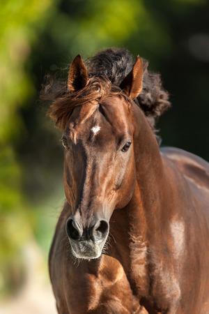 Rood paard met lange manen