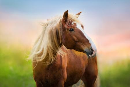 Retrato de caballo rojo al amanecer. Foto de archivo