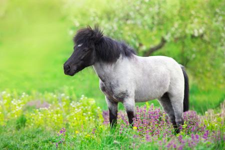 Pony de pie en el prado de flores