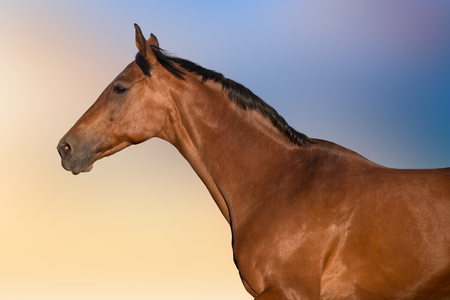 Bay horse portrait in motion against beautiful sky