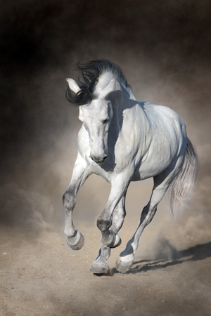 White horse run fast in dust against dark background 版權商用圖片