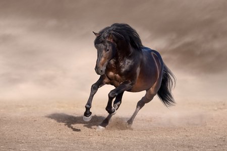 Bay horse with long mane run fast in desert dust Reklamní fotografie