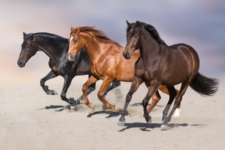 Horse herd run on sandy dust Stock Photo