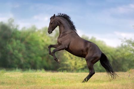 Aufzucht des Pferdes auf grüner Frühlingswiese
