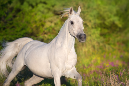 Beautiful horse in poppy flowers Stock Photo
