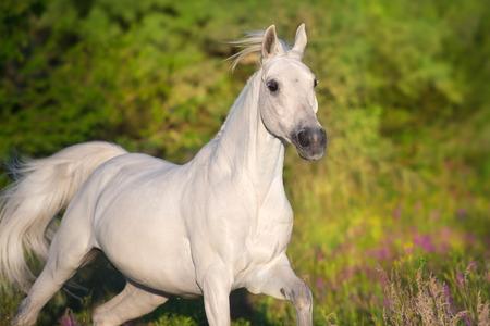 Beautiful horse in poppy flowers Standard-Bild