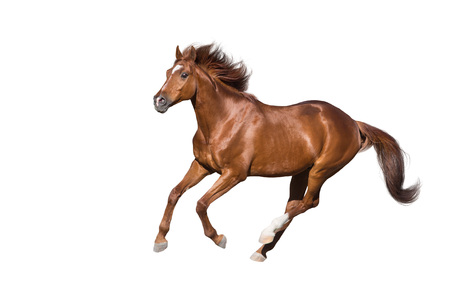 Red horse run gallop isolated on white background Banco de Imagens