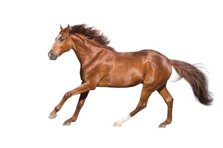 Roter Pferderennengalopp lokalisiert auf weißem Hintergrund