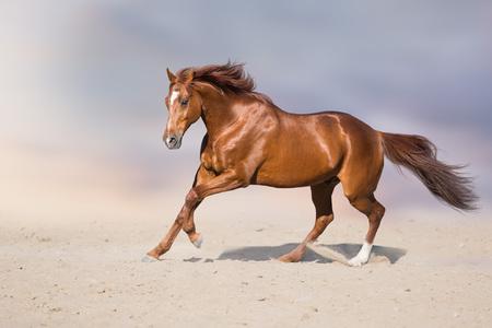 Red stallion in motion in desert dust against beautiful sky