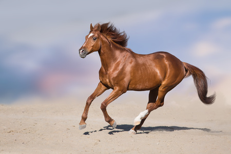 Red stallion in motion in desert dust against beautiful sky