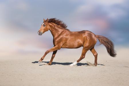 Red stallion in motion in desert dust against beautiful sky Reklamní fotografie - 109081401