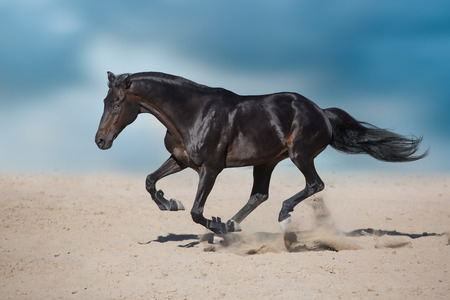 Stallion in motion in desert dust against beautiful sky