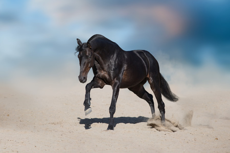 Stallion in motion in desert dust against beautiful sky Reklamní fotografie - 109081404