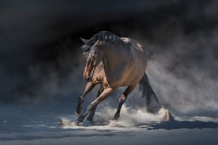 Stallion in motion in desert dust against dramatick background Reklamní fotografie