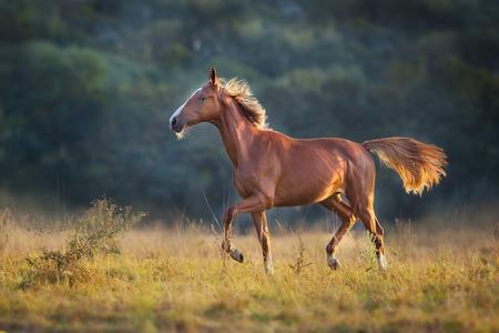 Red horse run in meadow Reklamní fotografie - 115314831