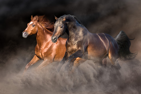 Two horse run gallop with dark background behind 免版税图像 - 113838297