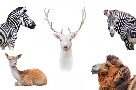 Animal collague isolated on white background Banque d'images - 113838299