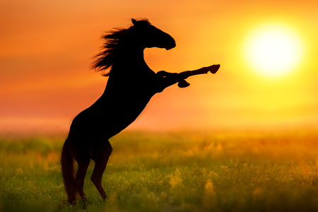 Horse with long mane rearing up silhouette at sunrise