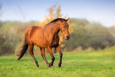 Horse running on green field