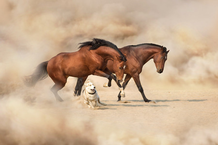 Two horses playing with a dog in the desert