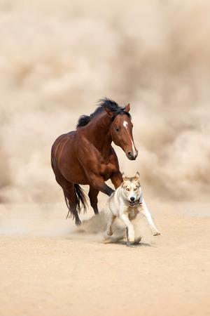 Horse running with dog in the desert Reklamní fotografie