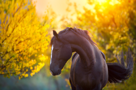Black beautiful horse standing in an open field during sunset