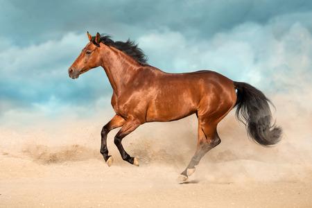 Bay horse run gallop in desert sand Reklamní fotografie - 117968199