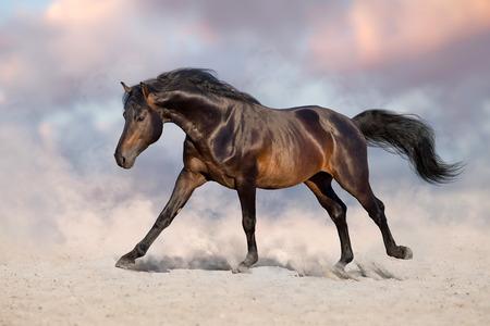 Bay horse run gallop in desert sand Reklamní fotografie - 117968200