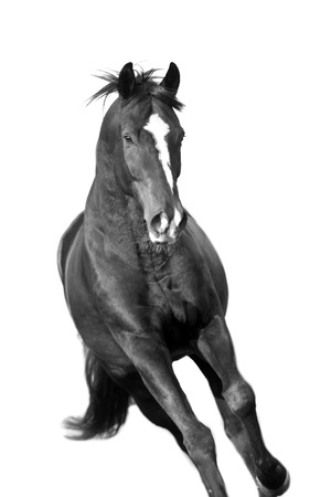 Horse portrait black and white 스톡 콘텐츠