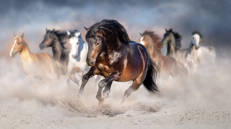 Horse herd run gallop in desert dust against dramatic sky Reklamní fotografie - 117968694