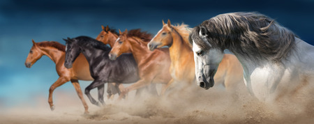 Horse herd run gallop in desert dust against dramatic sky Reklamní fotografie - 117968741