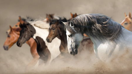 Horse herd run gallop in desert dust Reklamní fotografie - 117968764