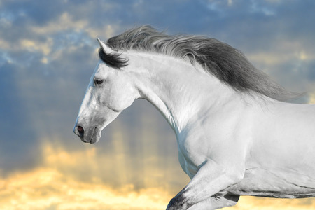 White horse in motion with sky behind Stockfoto - 117969768