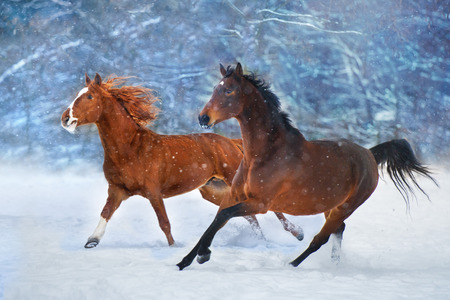 Two horse with long mane run fast in winter snow day Standard-Bild - 117969829