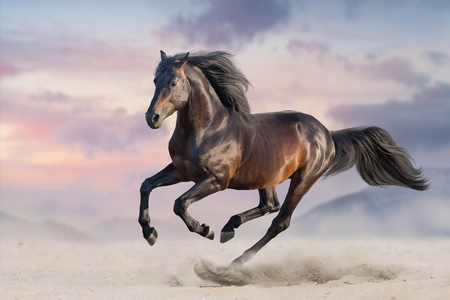 Bay horse run gallop in desert sand