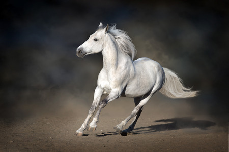 Stallion in motion in desert dust against dark background Imagens