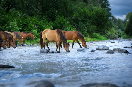 Horses drink in river Standard-Bild - 122768030