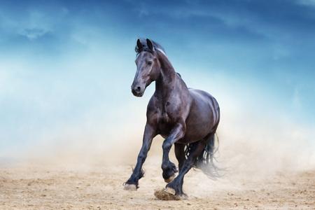 Black frisian stallion run in desert dust against blue sky Standard-Bild - 122768551